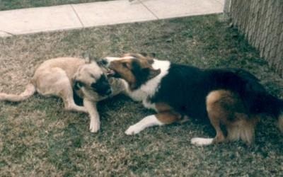 1986 Chubby, Sandy, play 19