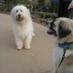 Twiggy and Herman