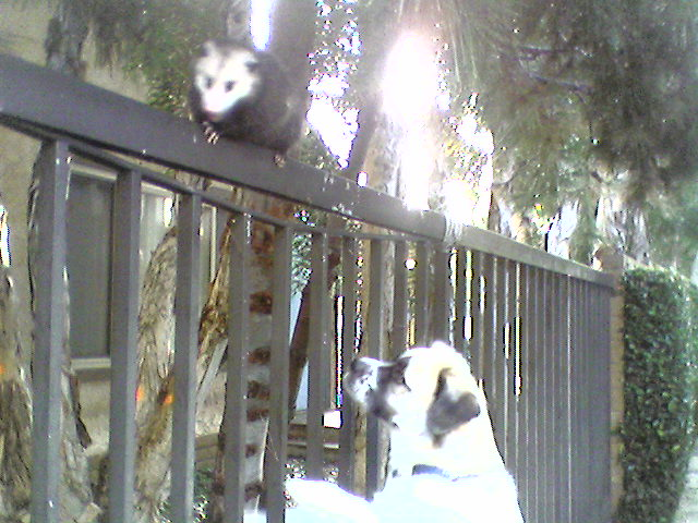 Possum and Herman