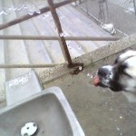 Herman drinking water drops from fountain