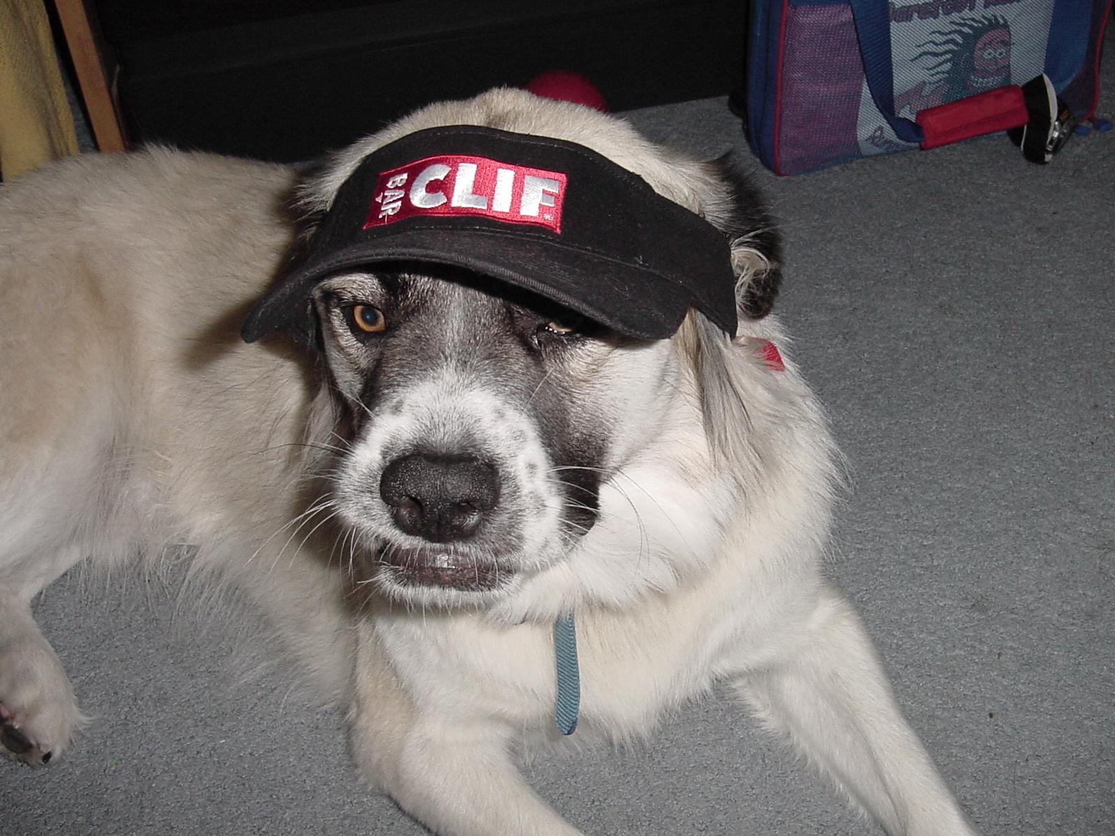 Herman with visor