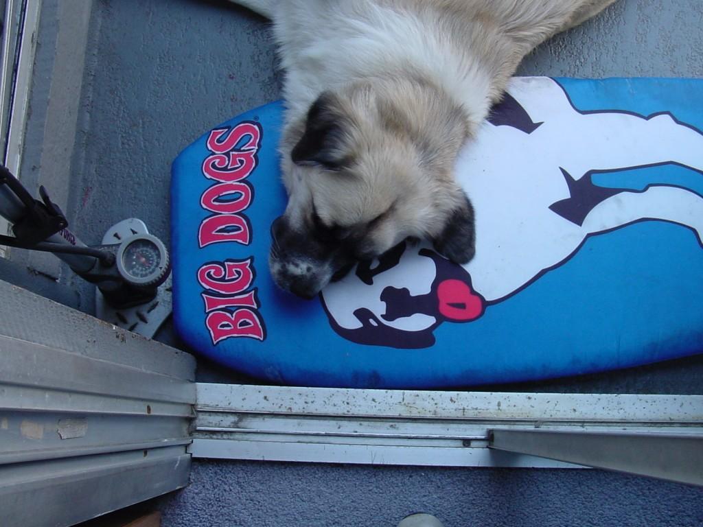 Herman and Big Dog