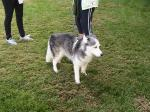 Fuzzy dog