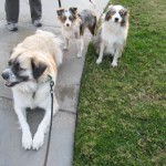 Herman, Sadie, ZuZu
