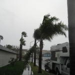 Palm trees swaying in the hurricane
