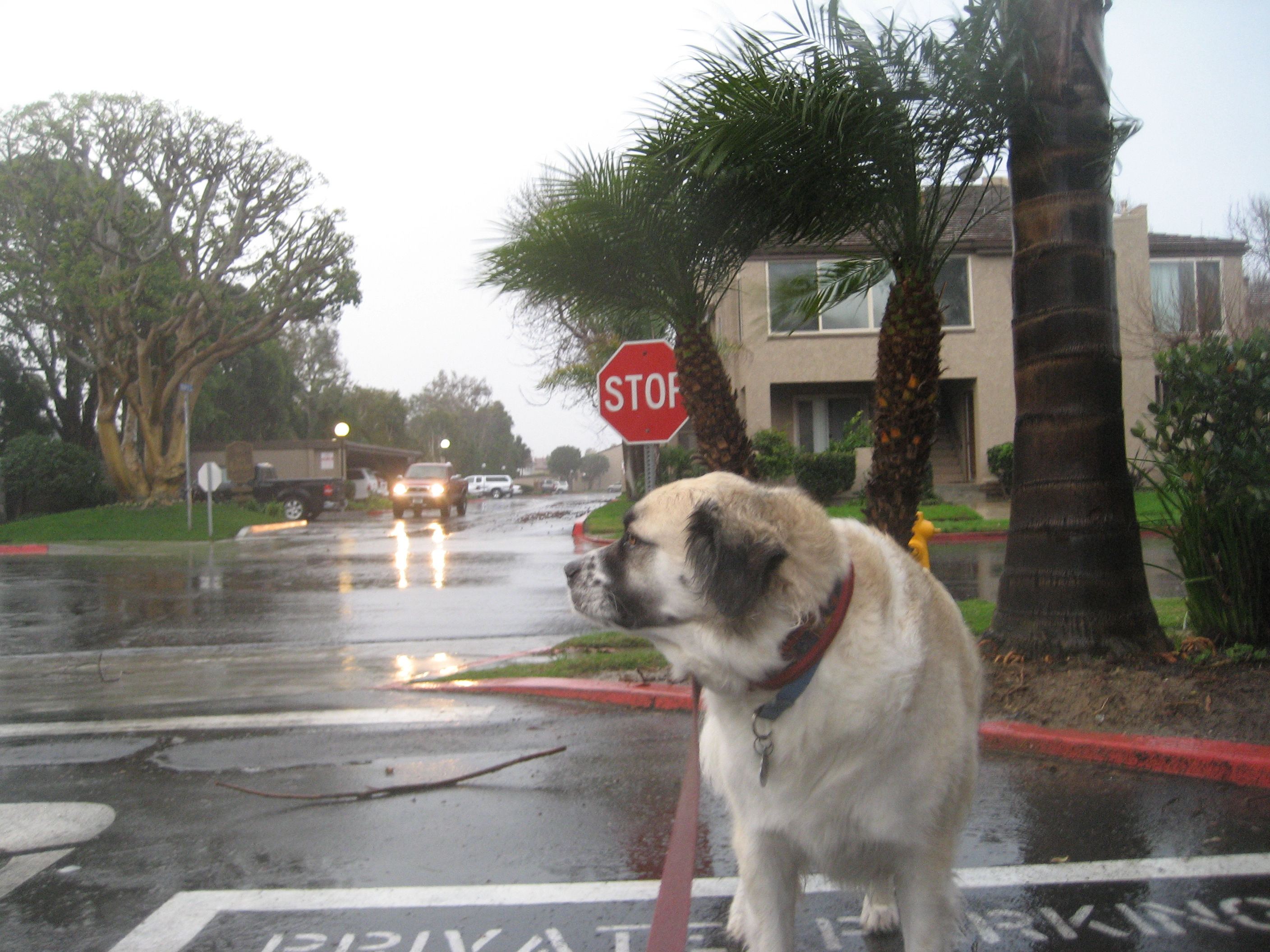 Herman in the storm
