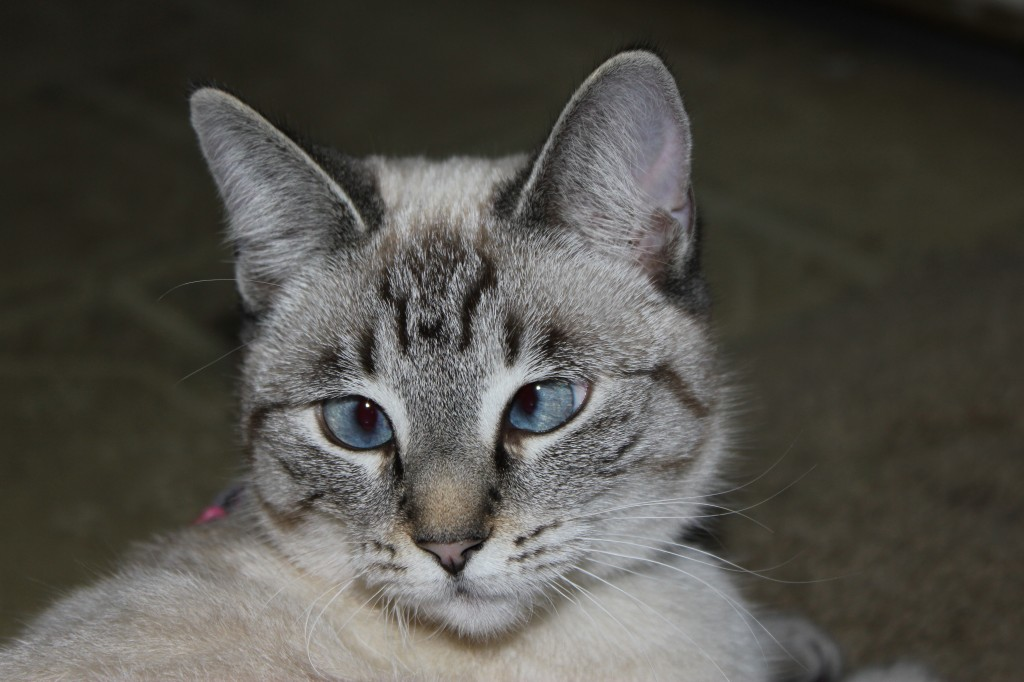 Aqua, our little cross-eyed girl