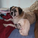 Herman and Aqua after bath