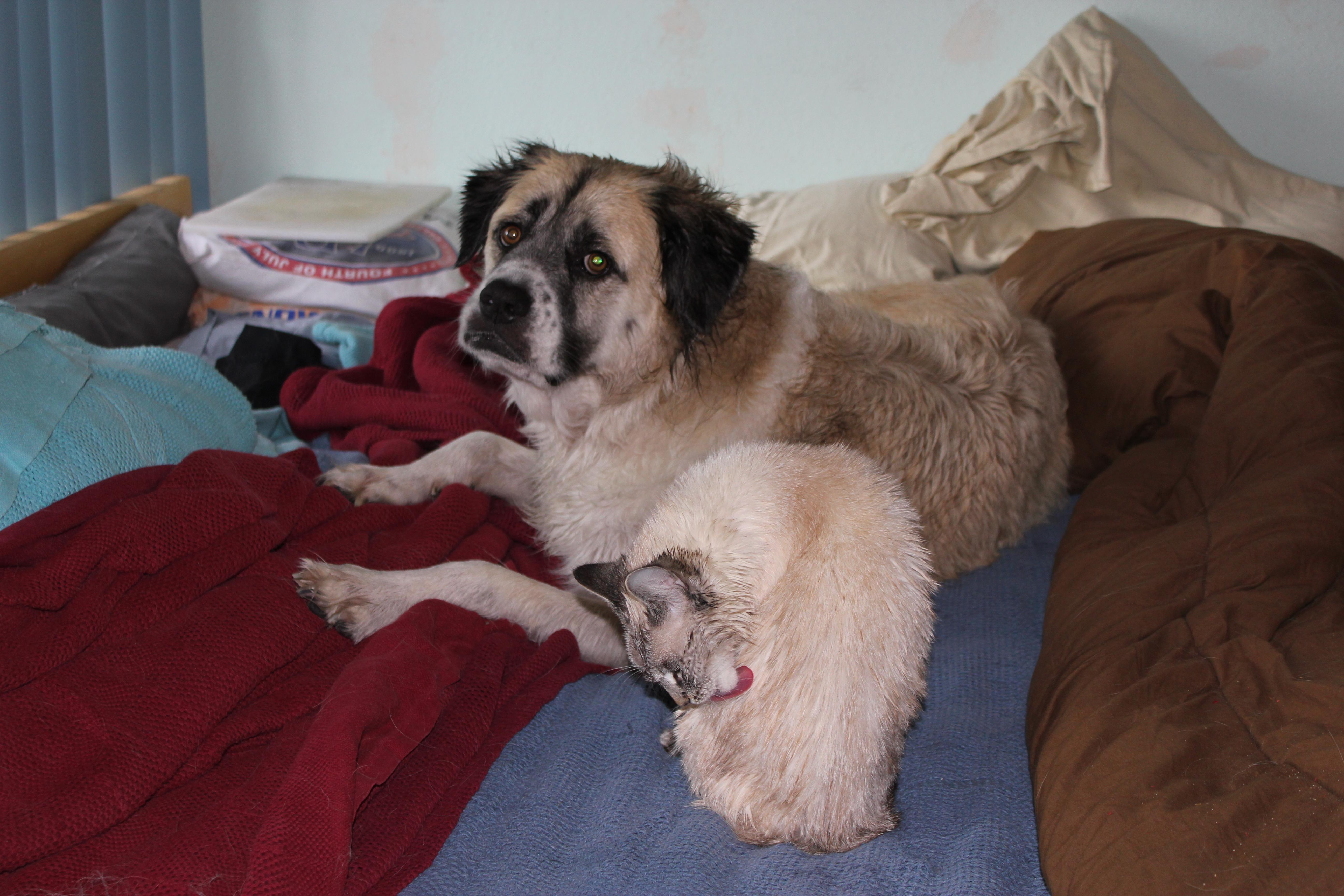 Herman and Aqua after bath