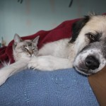 Herman and Aqua cuddle after bath
