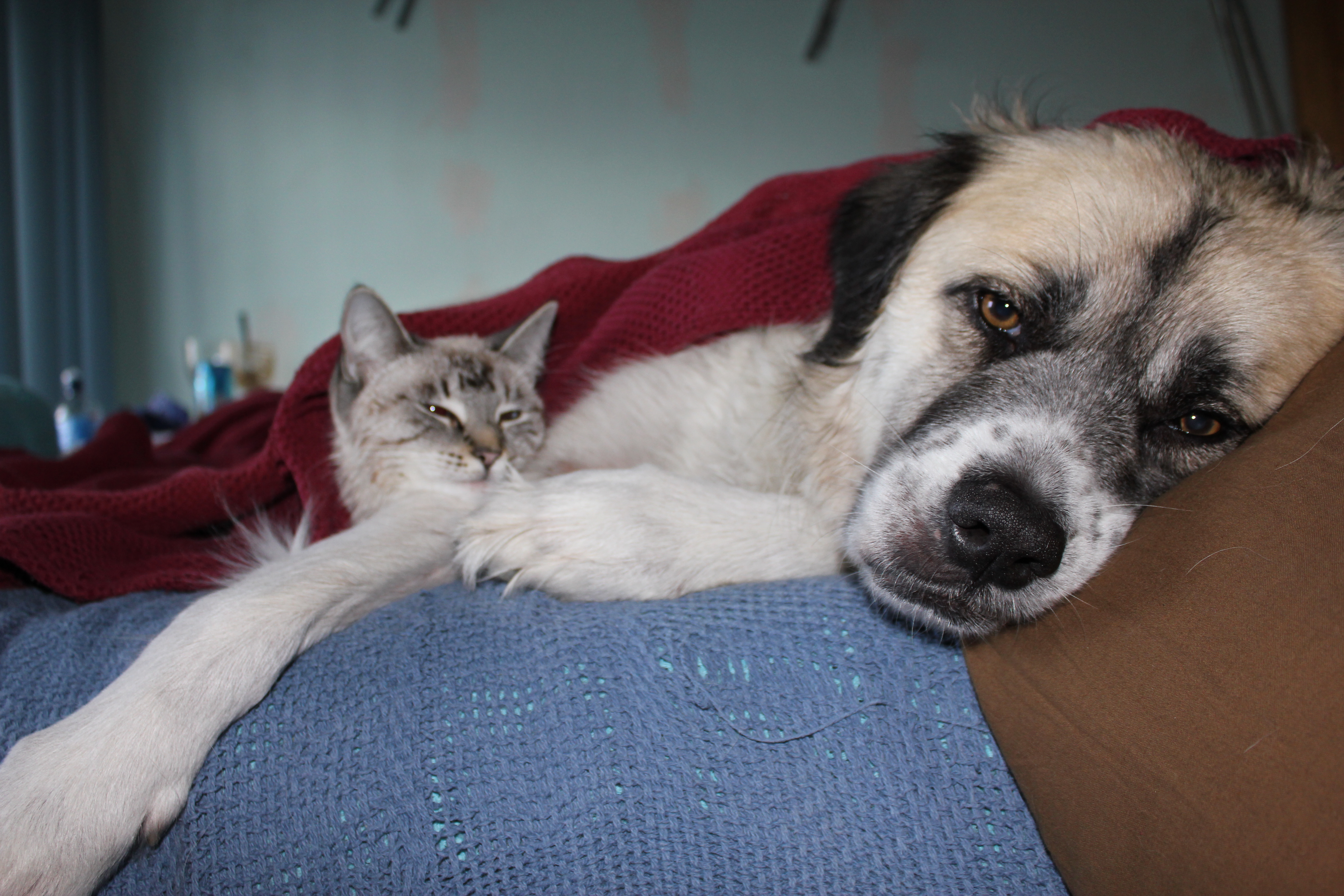 Herman and Aqua cuddle after bath