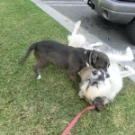 Steel and Herman