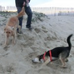 Kasey and Switch, Bolsa Chica State Beach, Huntington Beach CA