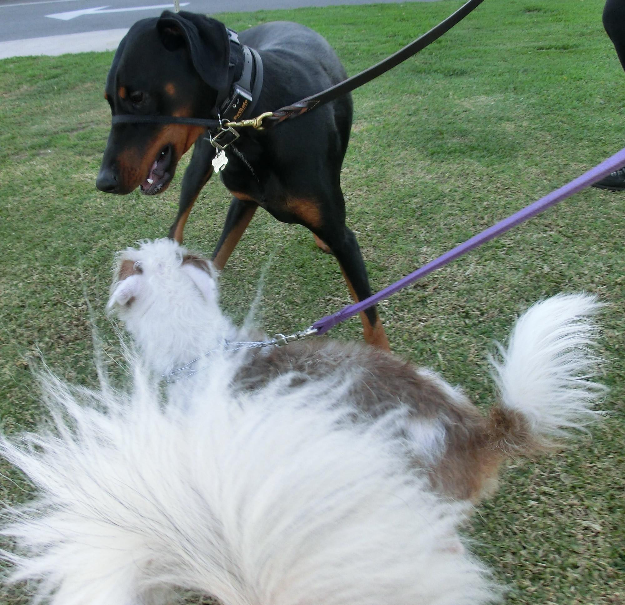 Herman's tail, Noodle, Fletch