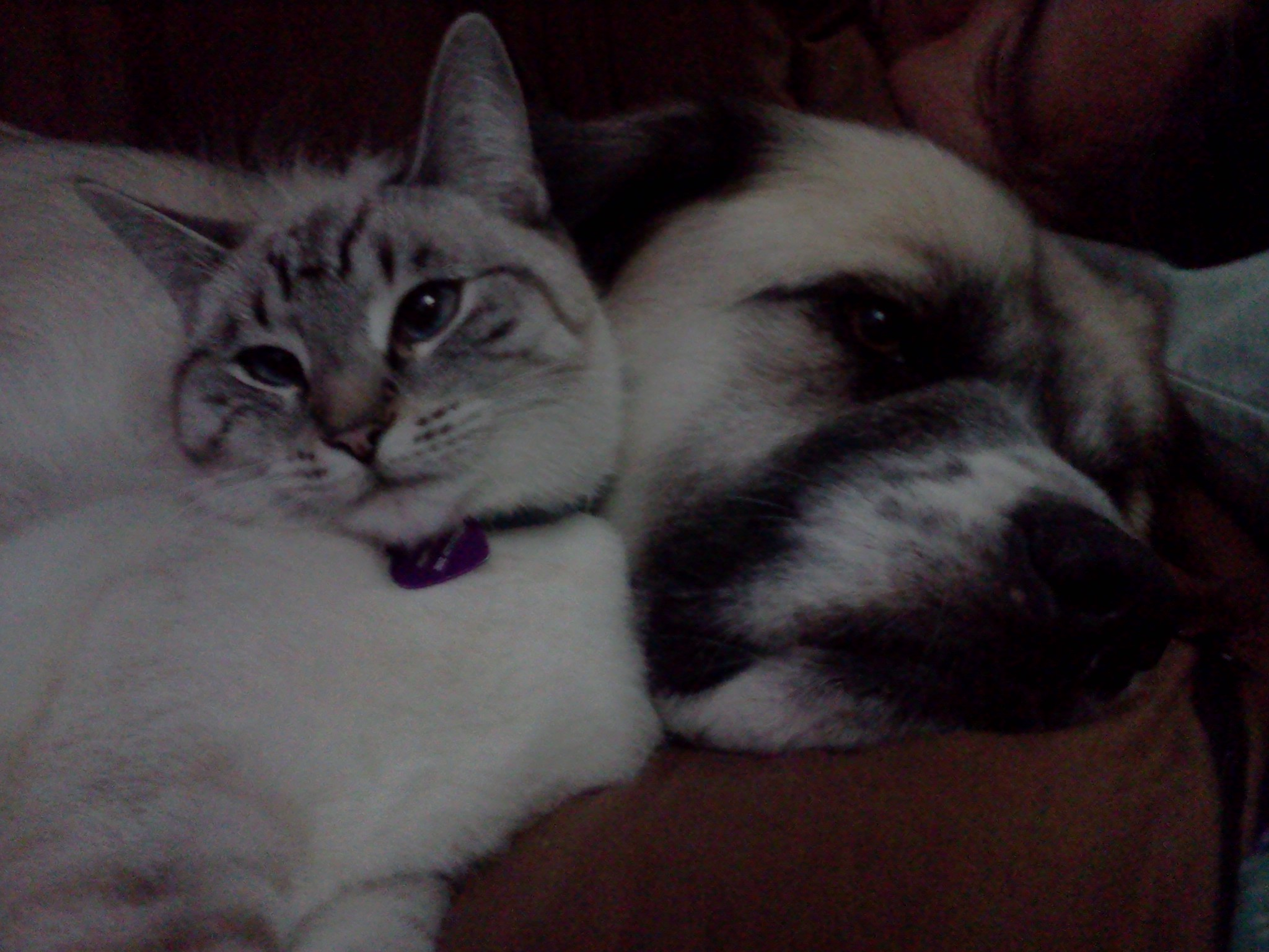 Aqua and Herman cuddle up while watching scary Psycho Herman videos on YouTube