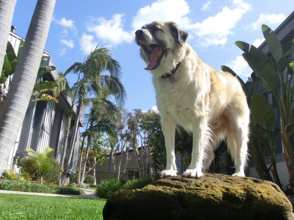 I am Herman, hear me yawn.