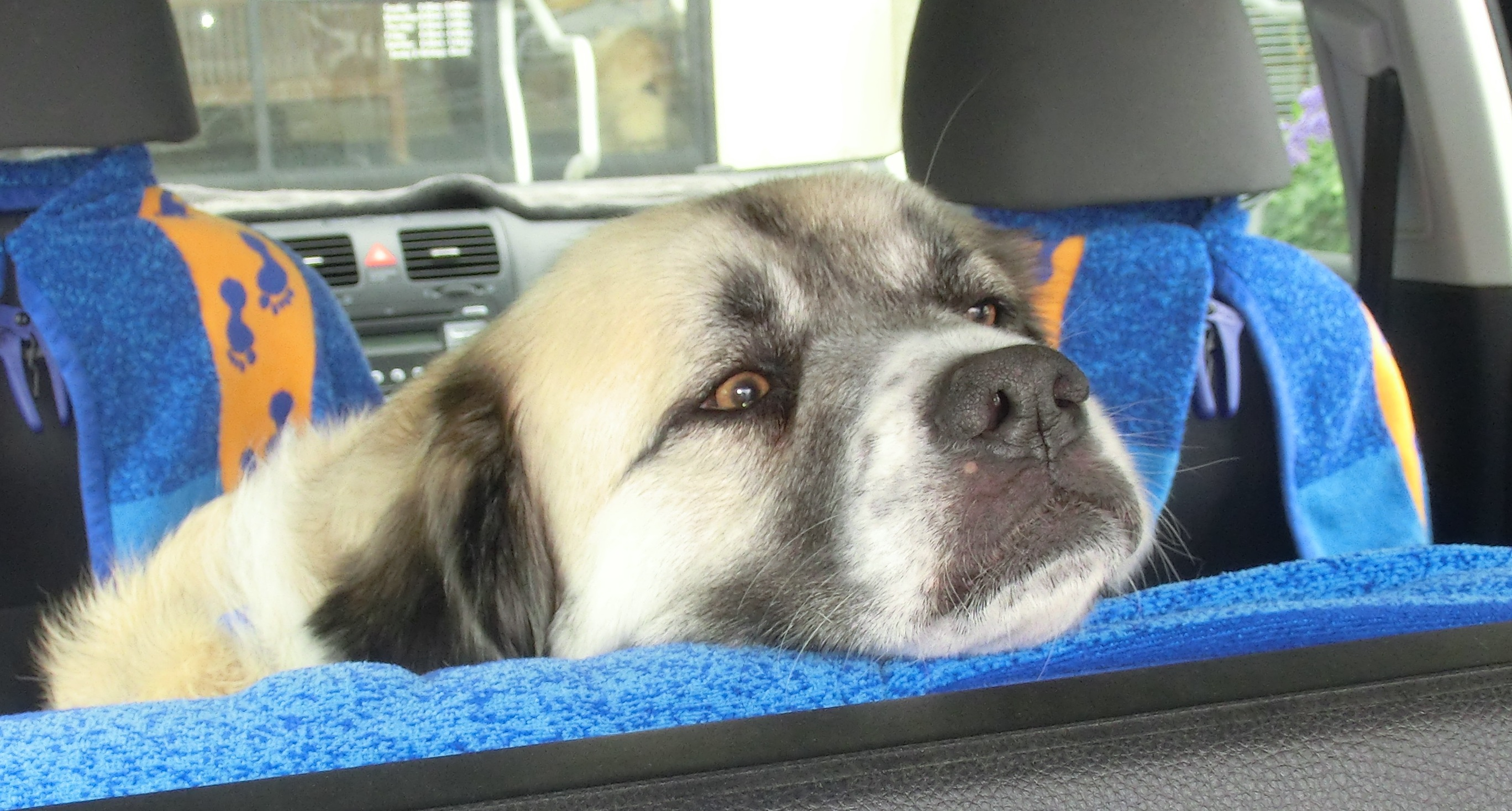 Herman after visit with veterinarian