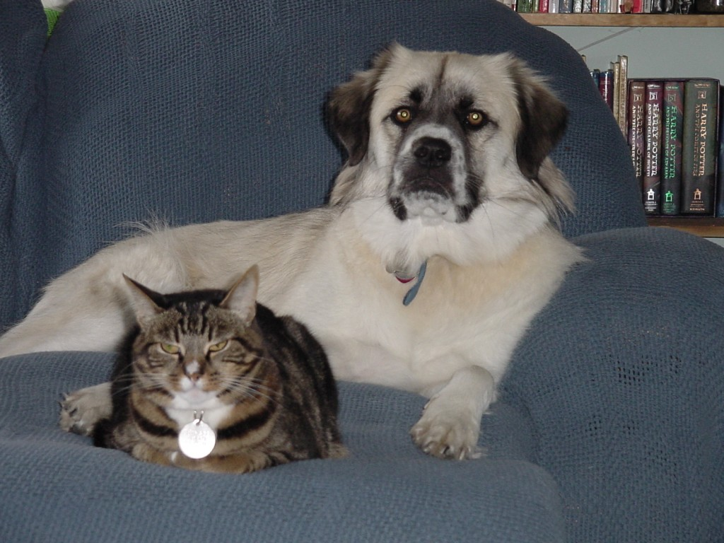 Herman and Strips pose distinctively on sofa