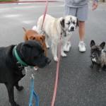 Stuey, Zerah, Herman, Meeshka