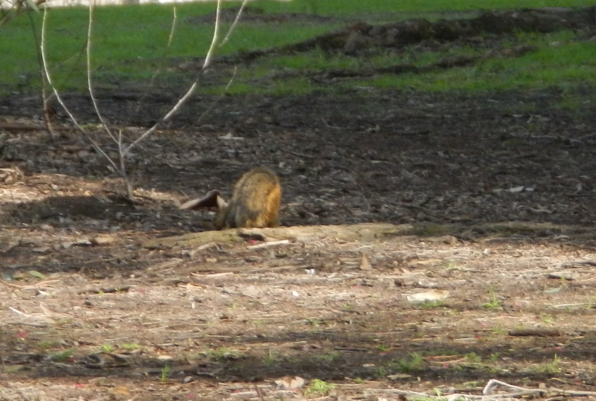 DSCN0689crop Squirell