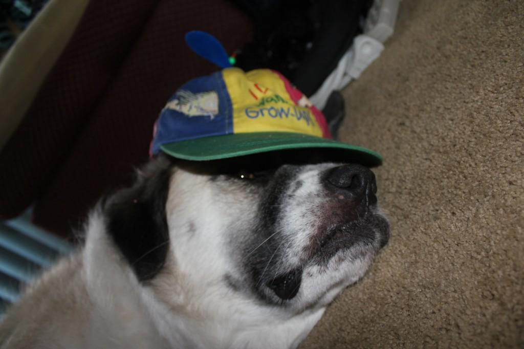 Herman with propeller hat