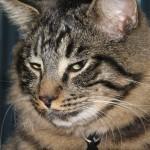 Lebowski sleepy face