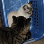 IMG_9395-crop Lebowski Aqua Laundry basket