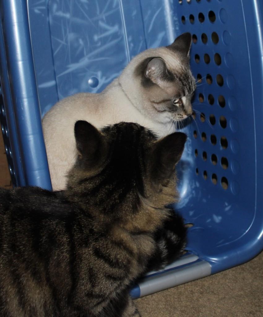 Aqua takes the Laundry basket