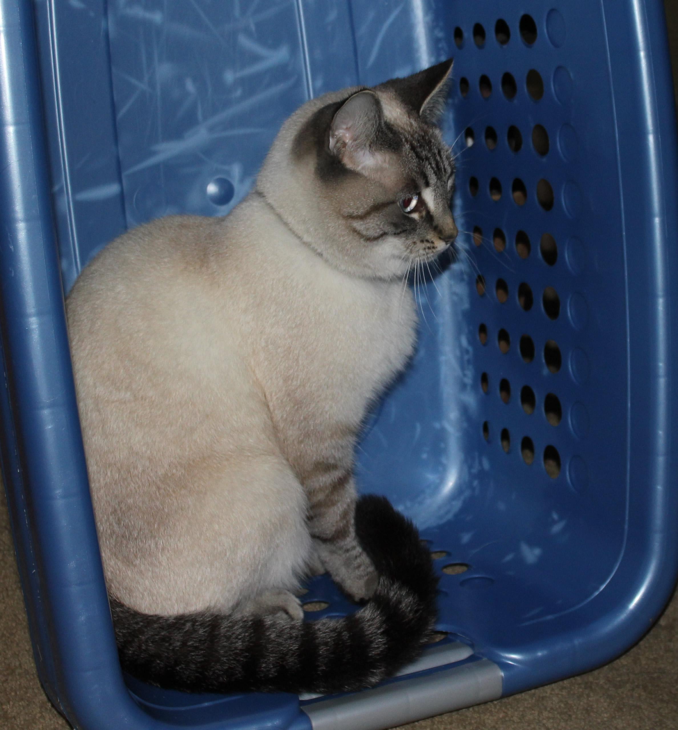 IMG_9397-crop Aqua laundry basket
