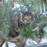 Lebowski on the prowl