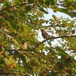 Bird in tree, Austin TX 2012 May