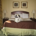 Herman in bed, Austin TX 2012 May