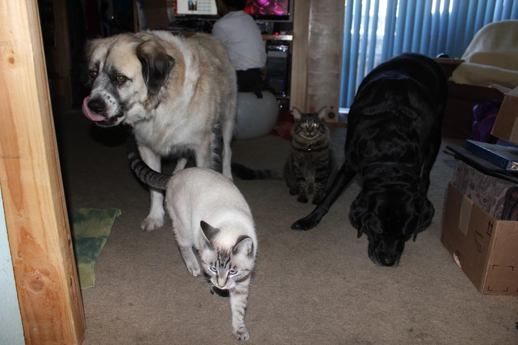 Herman, Aqua, Lebowski, and Stuey