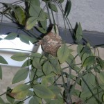 Hummingbird nest in tree next to our stairs