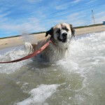 Herman cooling off in the Pacific Ocean