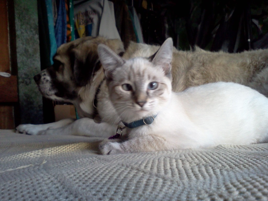 Aqua meets PsychoHerman relaxes with her new housemate (2011 July 2)