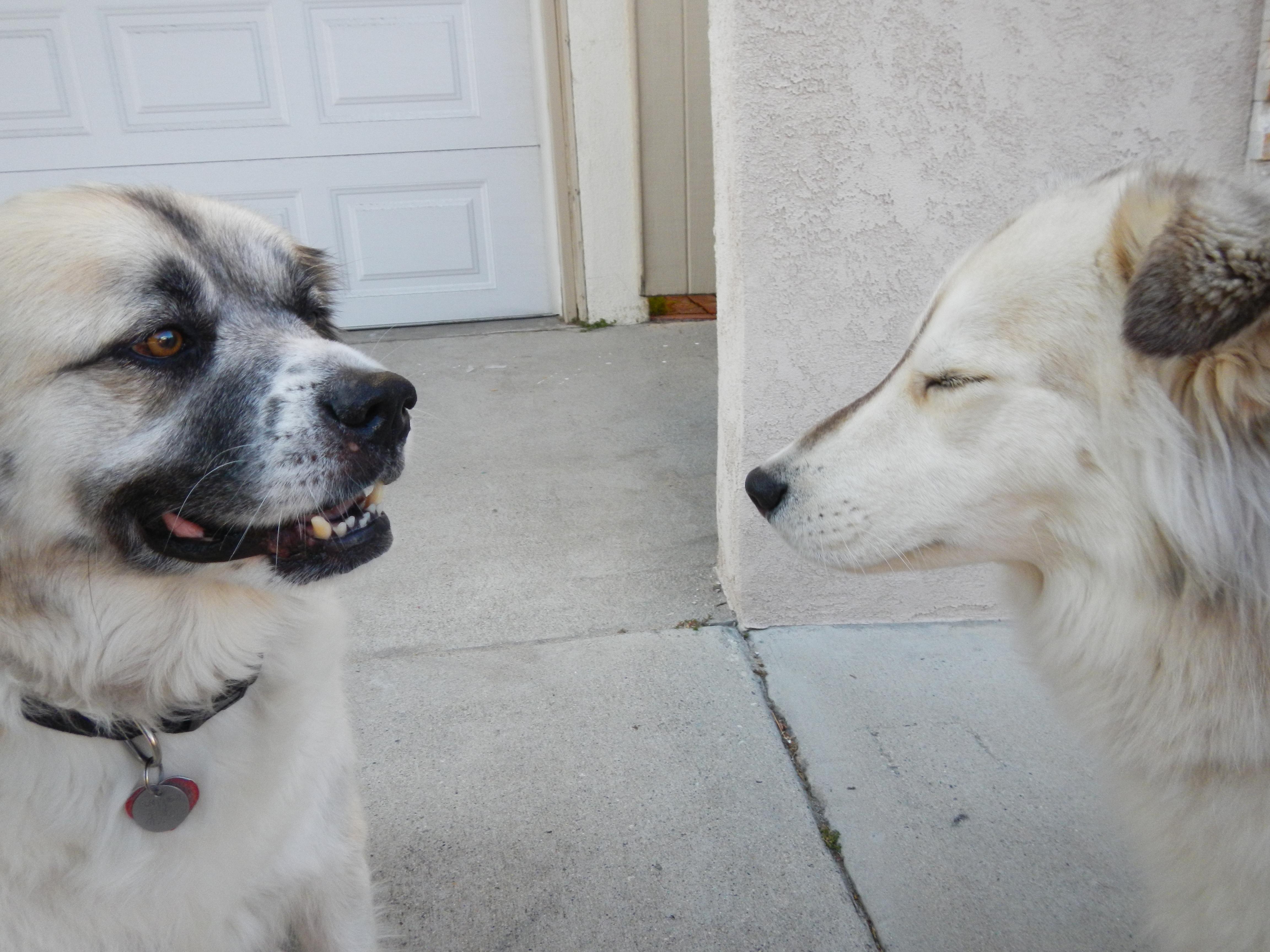 DSCN1293 Herman and Daisy