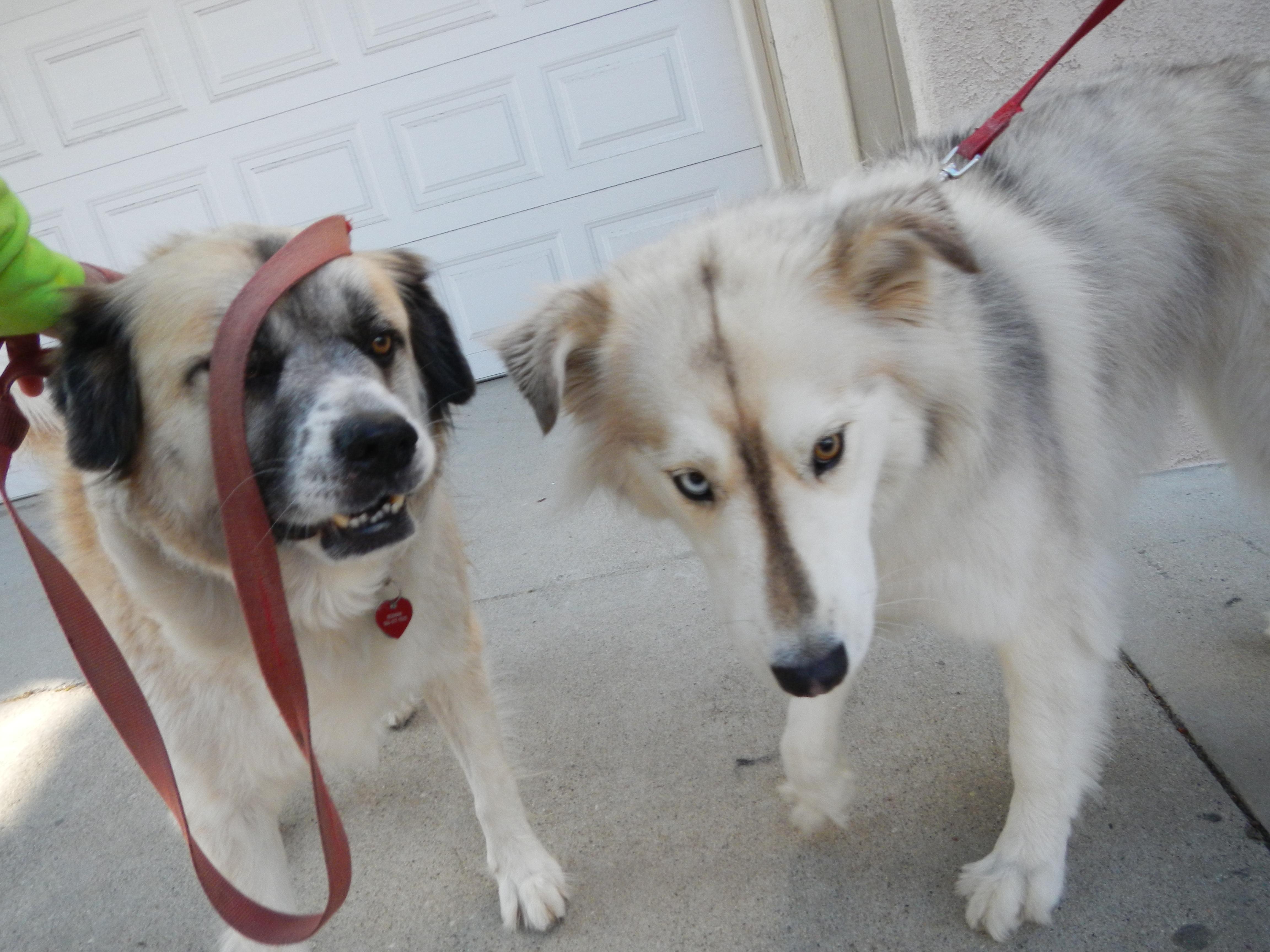DSCN1297 Herman and Daisy