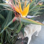 Bird of Paradise and Herman