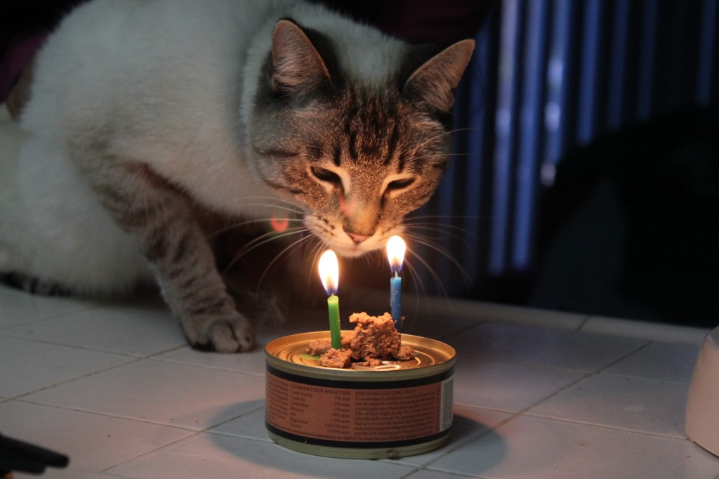 Aqua looking at birthday candles on can of catfoot