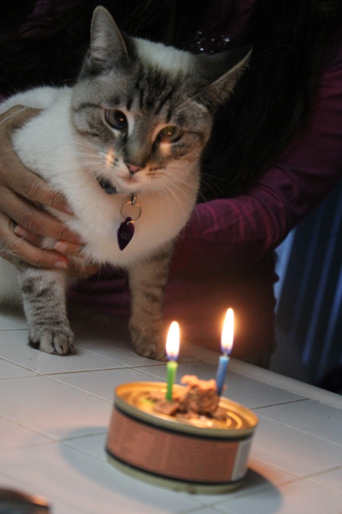 Aqua staring at birthday candles on can of catfoot