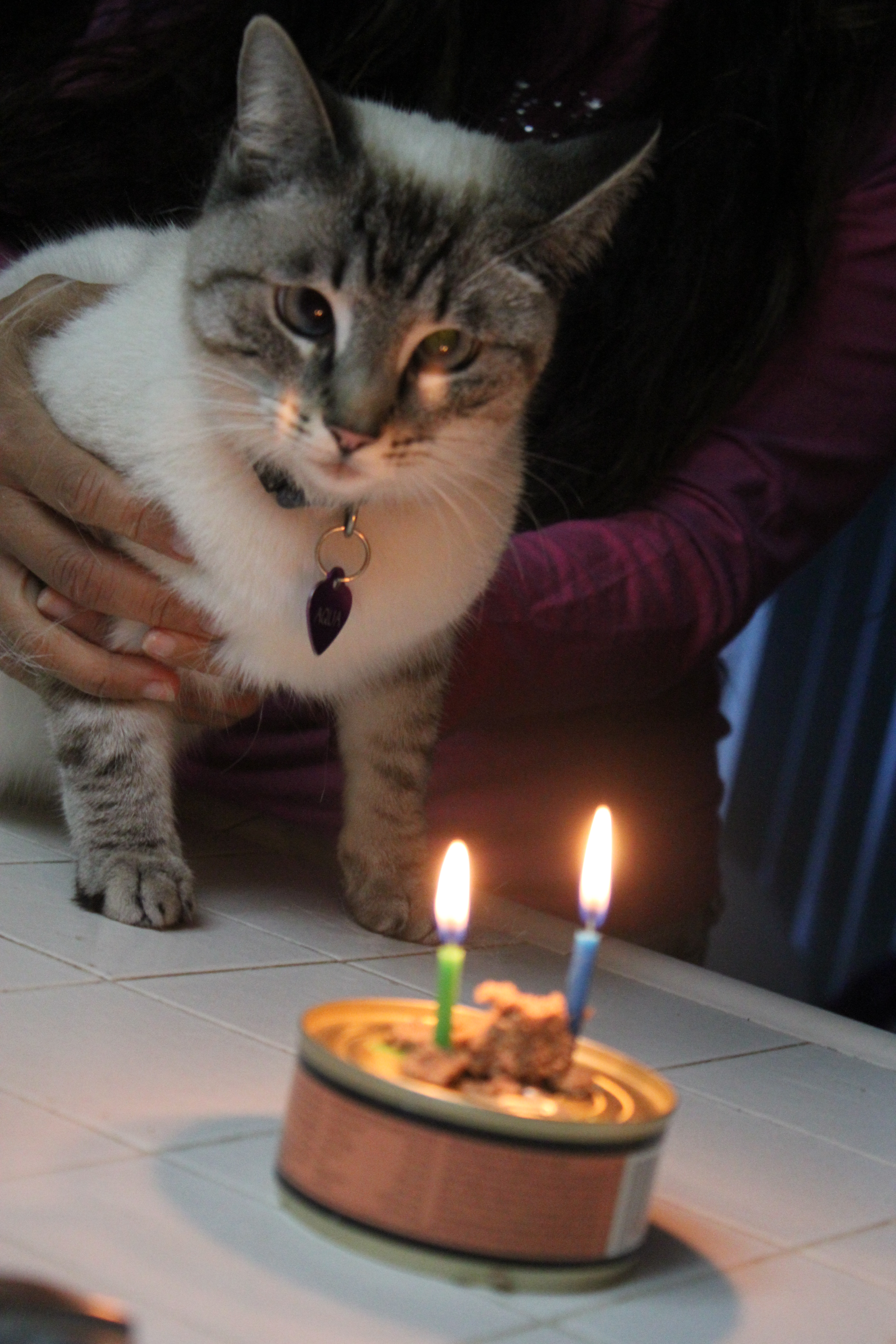 IMG_0414 Aqua staring at birthday candles on can of catfoot