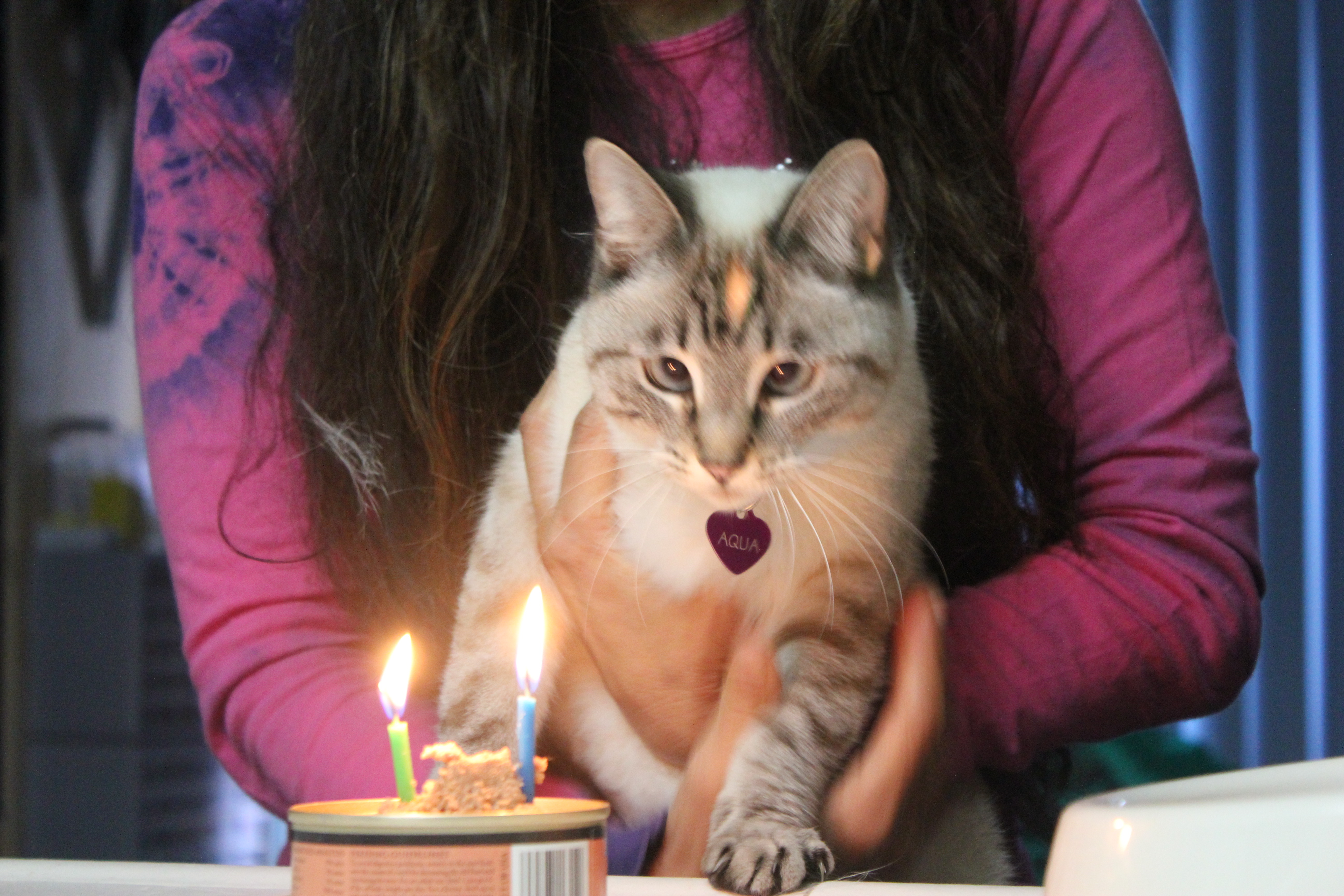 IMG_0418 Aqua staring at birthday candles on can of catfoot