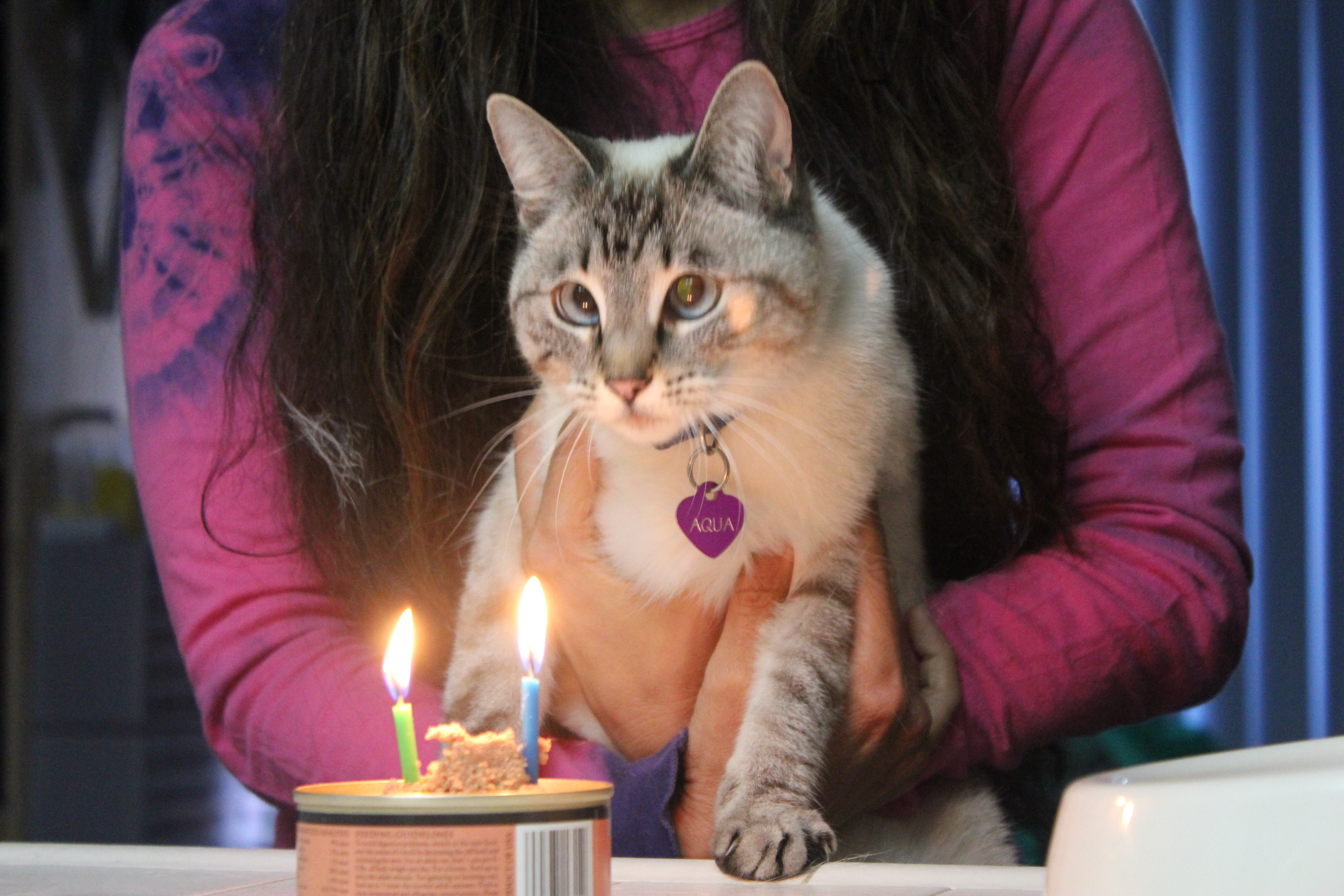 IMG_0419 Aqua staring at birthday candles on can of catfoot