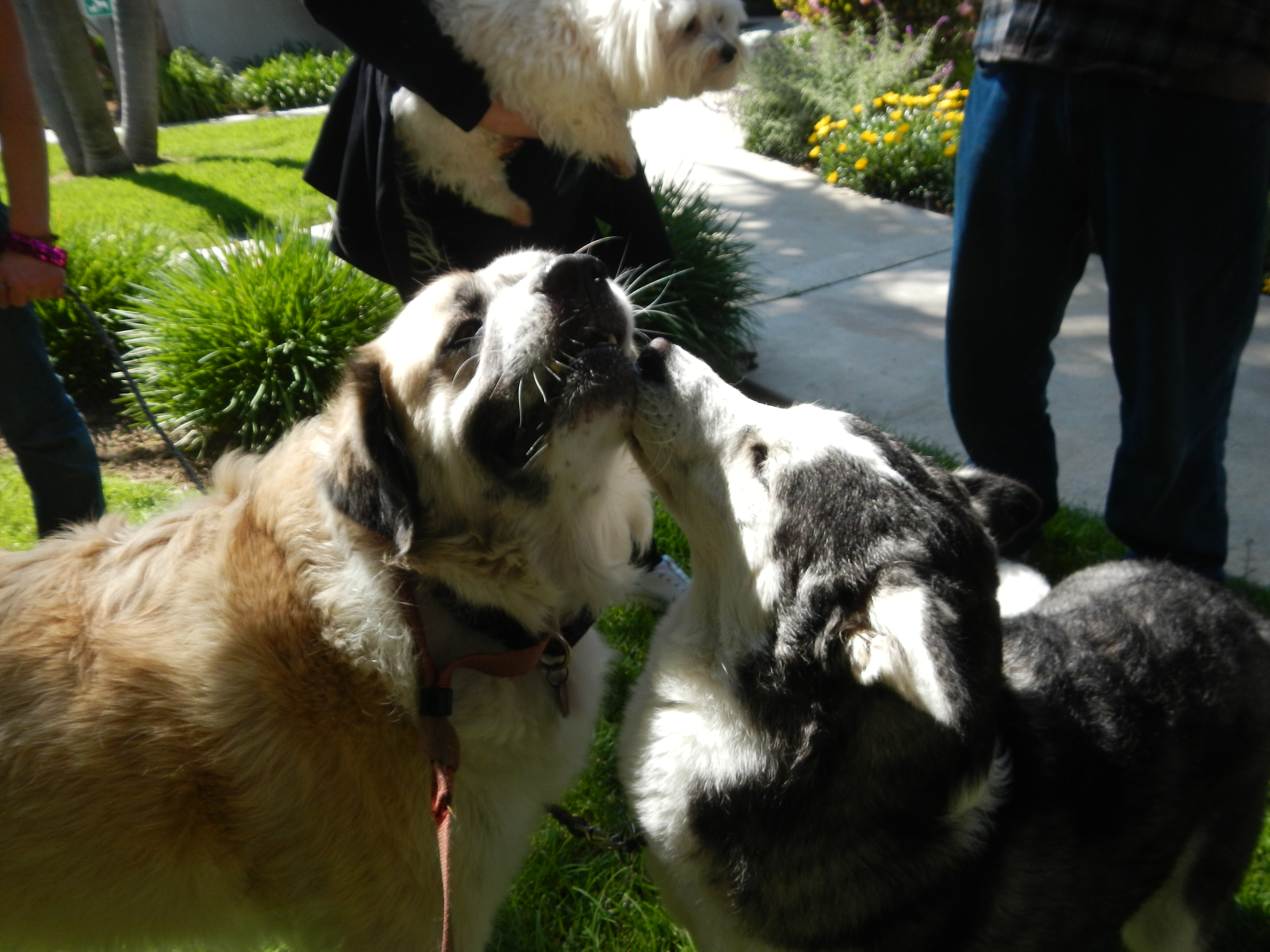DSCN1492 Lila kissing Herman
