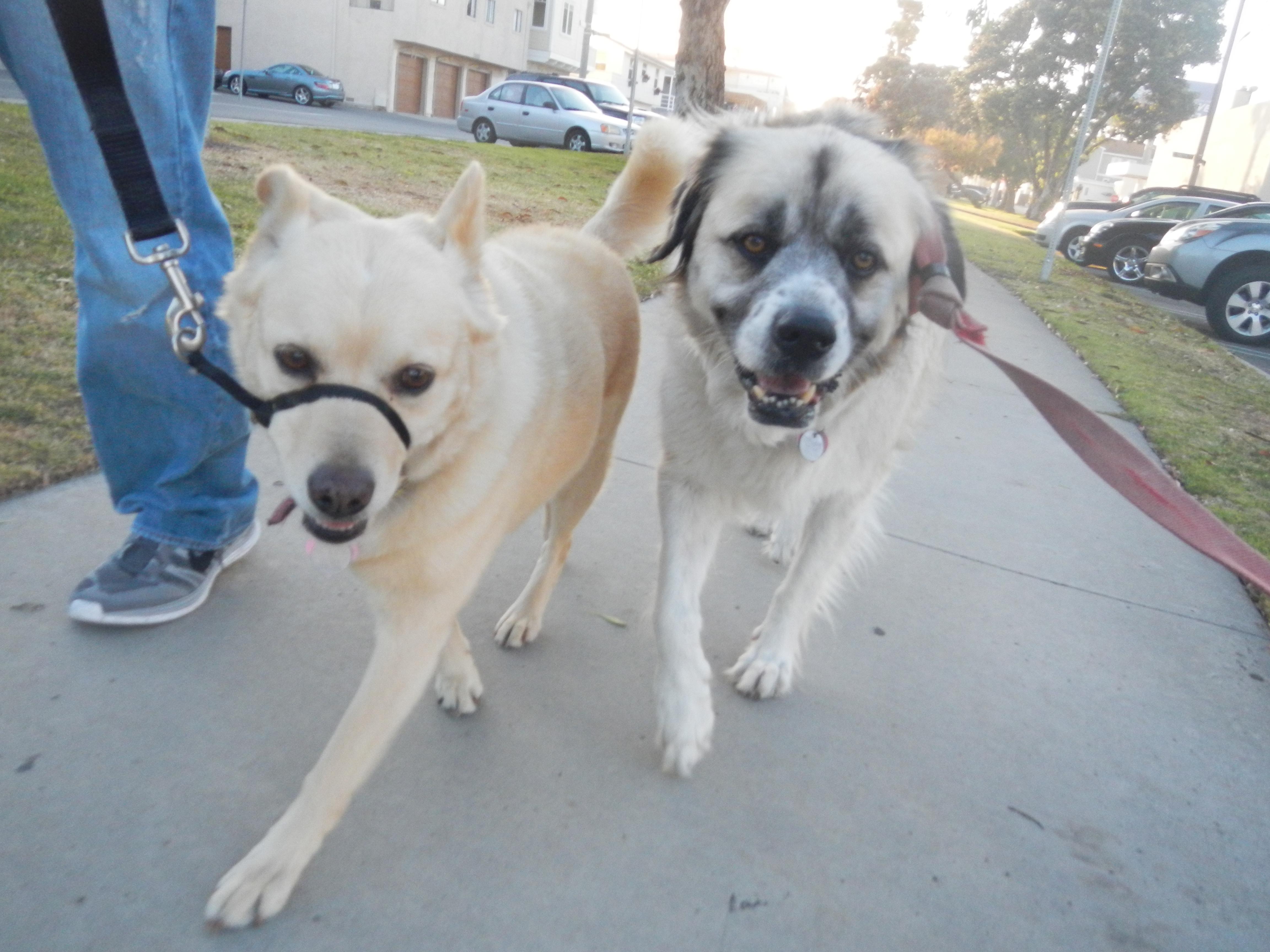 Goldie and Herman