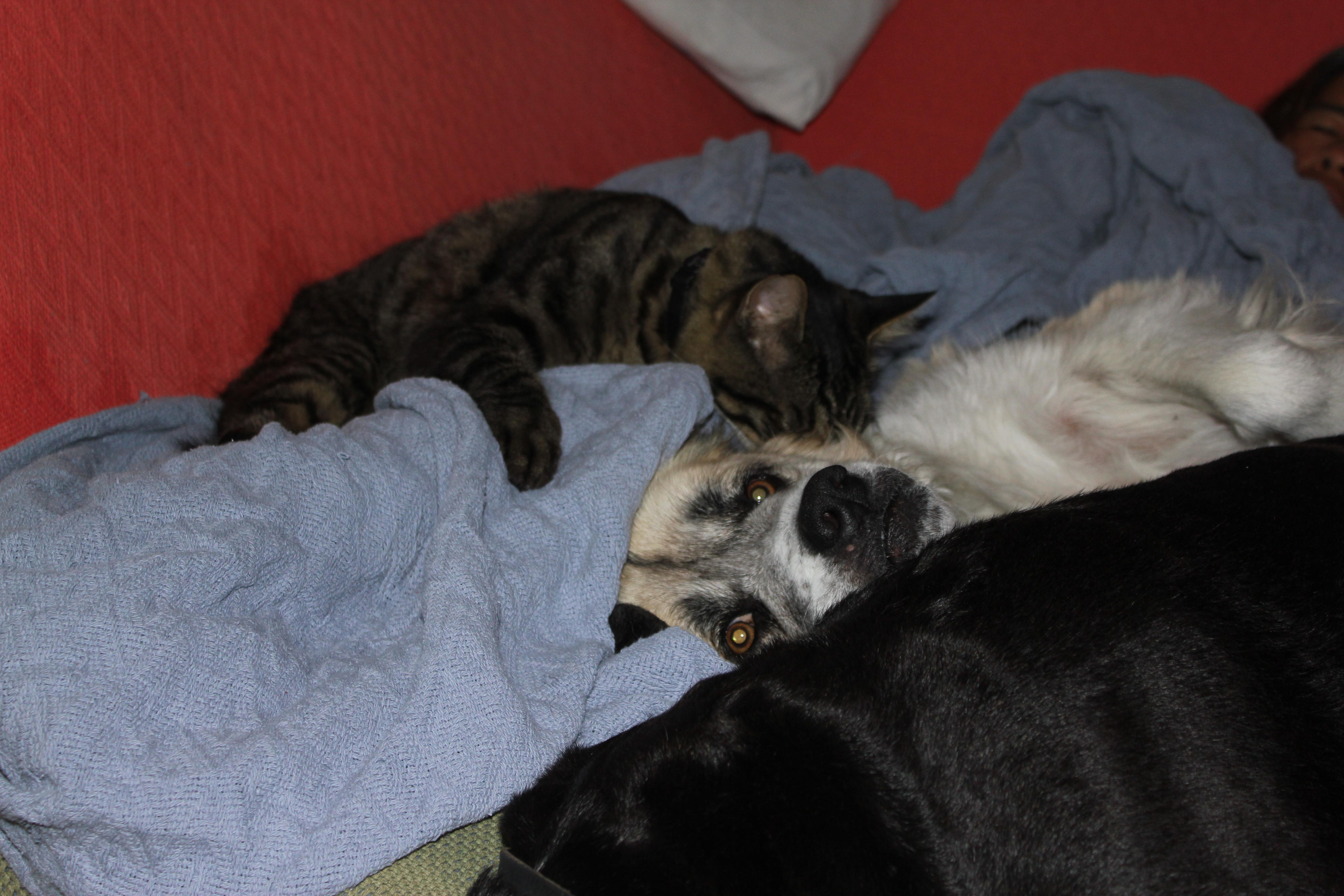Herman babysitting Lebowski (the cat) and Stuey (the dog)
