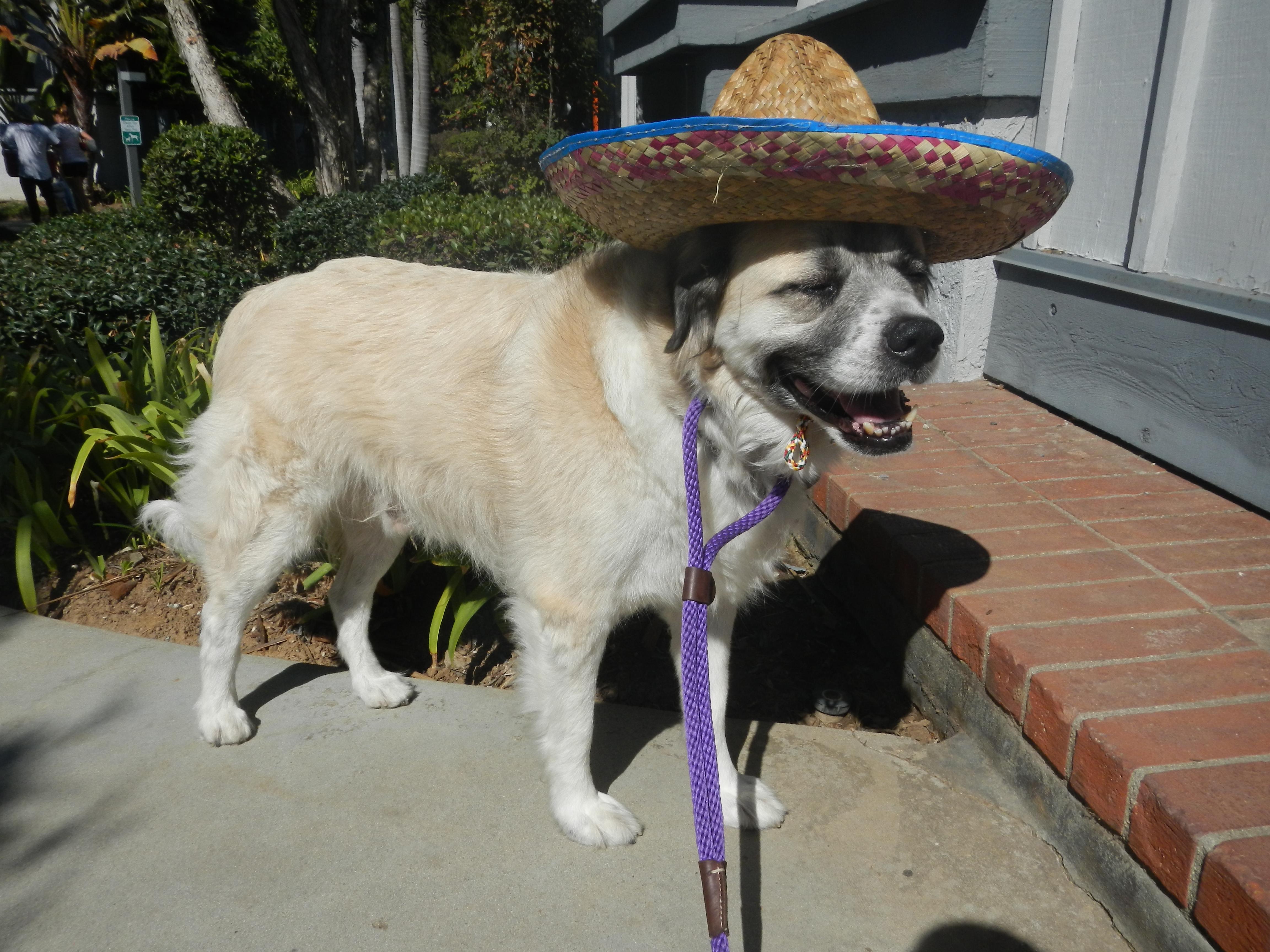 Psycho Herman's fiesta hat