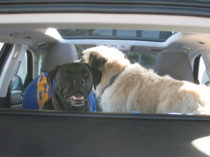Stuey and Herman in VW Jetta