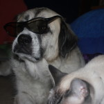 Herman prefers passive polarized 3D glasses